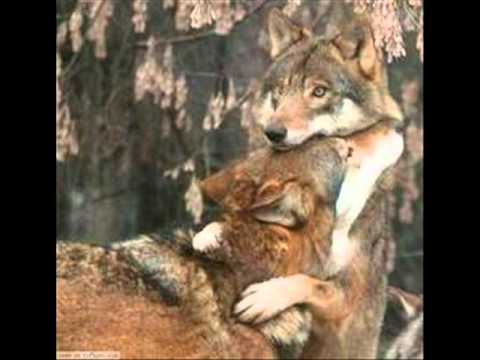 The Tenderness of a Wolf