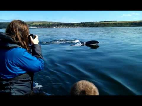 Dolphins off Cromarty - EcoVentures
