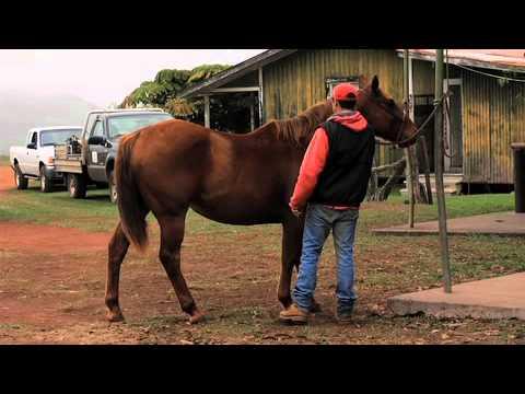 PBS Hawaii - HIKI NŌ Episode 413 | Hosted by Kapolei High School | Full Program