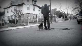 Dog Training In Queens Ny: Chris Alcontin's Practice Makes Perfect Dog Training - Justin