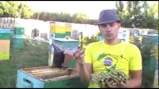 Прополис пчелиный от производителя.(, 2013-11-22T14:16:34.000Z)