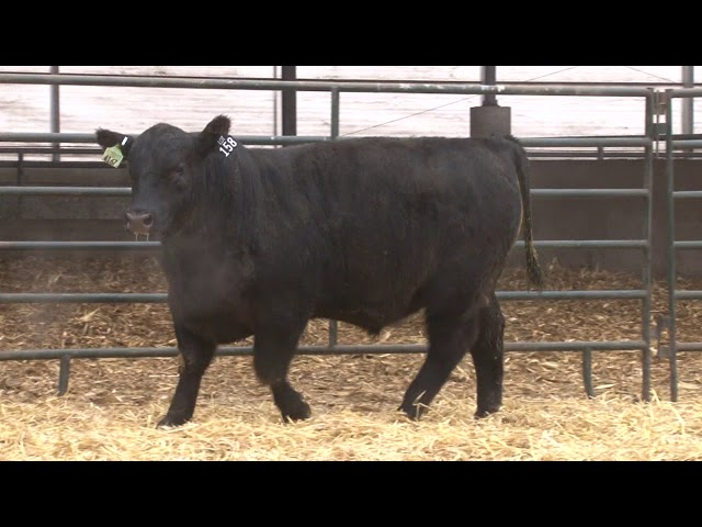 Schiefelbein Angus Farms Lot 158