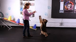 How to Teach Your Dog the Freeze Trick | Dog Tricks