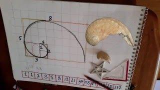Vesica Pisces Ep9 Shells, Phi & Fibonacci Spirals