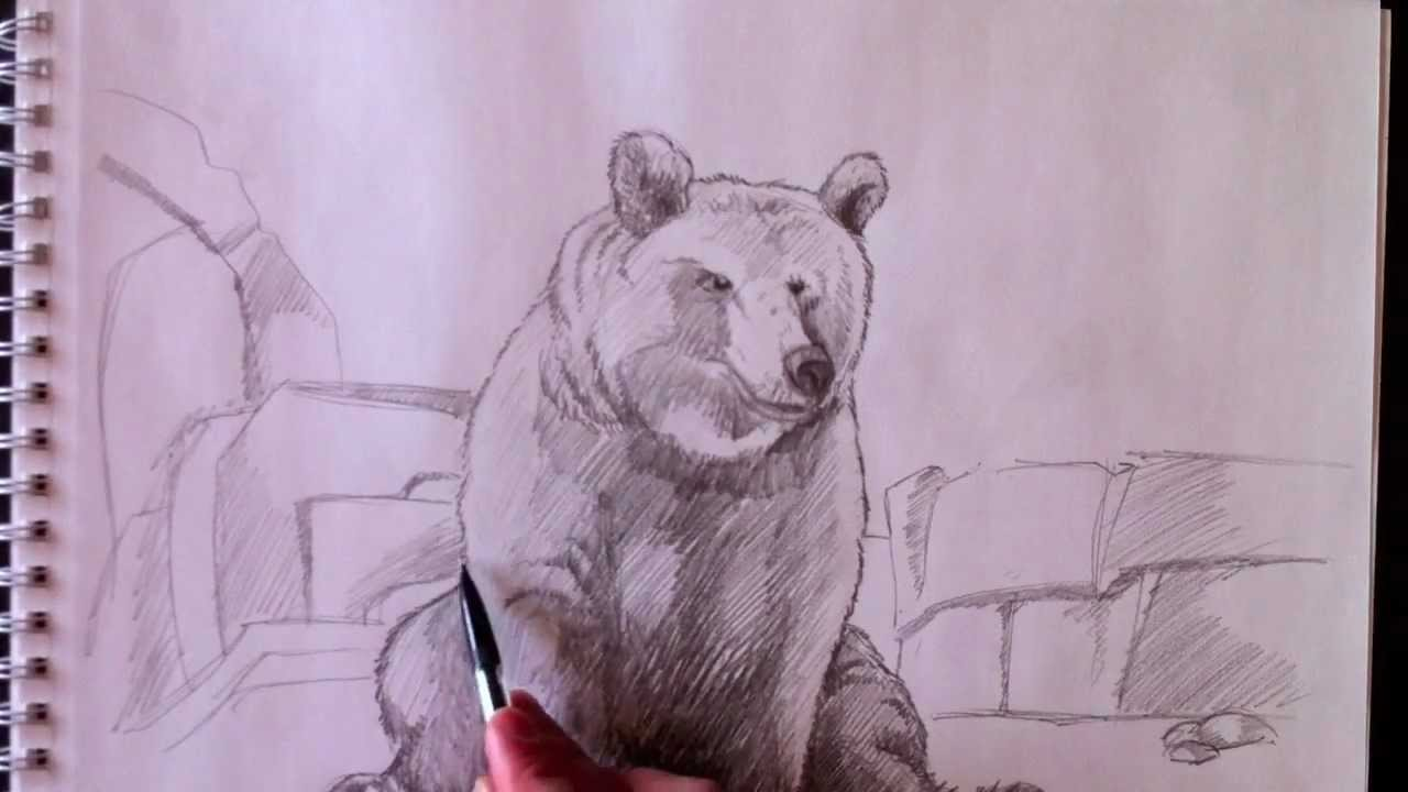 Bear ours paolo morrone youtube - Dessiner ours ...