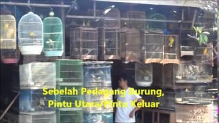 Kios Sangkar Burung Kami, Guwungandotcom, Pasar Burung Satria, Jalan Veteran, Denpasar, Bali