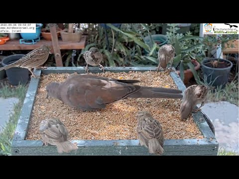 Israel Garden Bird Feeder Cam | The Charter Group Of Wildlife Ecology
