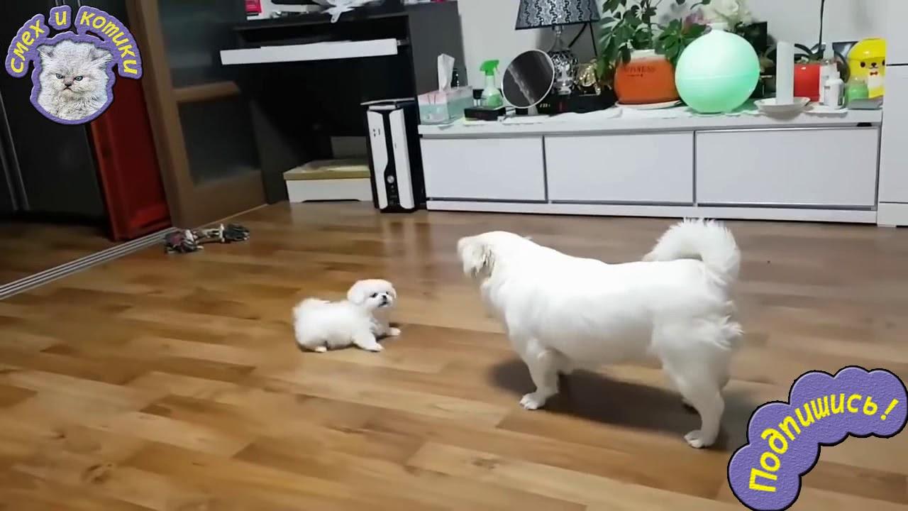 Папа И Сын - Собака Лает На Щенка