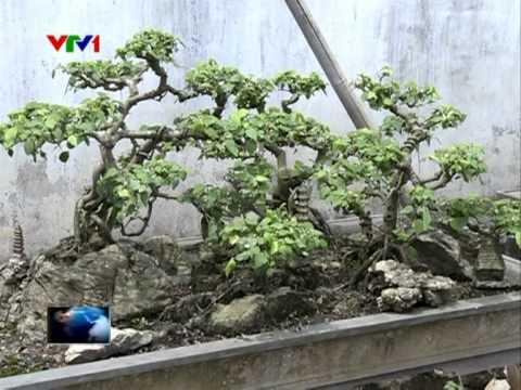 Vietbonsai và VTV luôn đồng hành cùng sinh vật cảnh