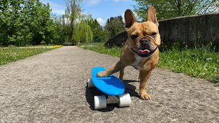 Will My Dog Master Skateboarding Trick