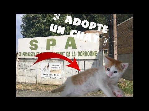 J'adopte Un Chat à La S.P.A !