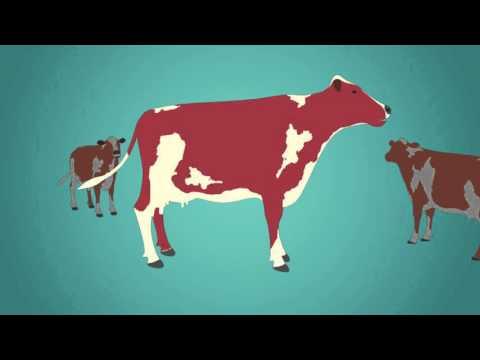 Dr. Joseph Perrone Antibiotic Use In Animals