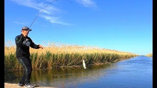 Рыбалка возле дома. Майская разведка на хищника (судак, берш). Сазан на нересте. Вело - рыбалка.