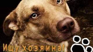 Селена - собака с самыми красивыми глазами