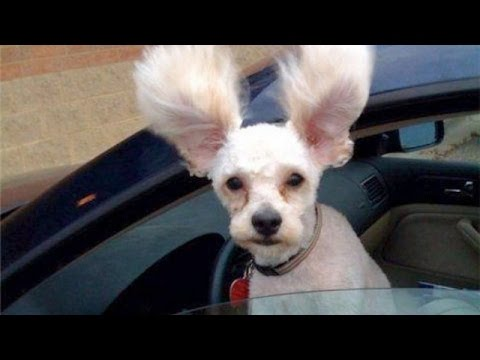 WARNING!! EXTREMELY LAUGHABLE DOG VIDEOS