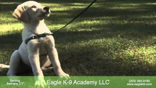 Eagle K 9 Academy - Dog Training In Bethany, Ct