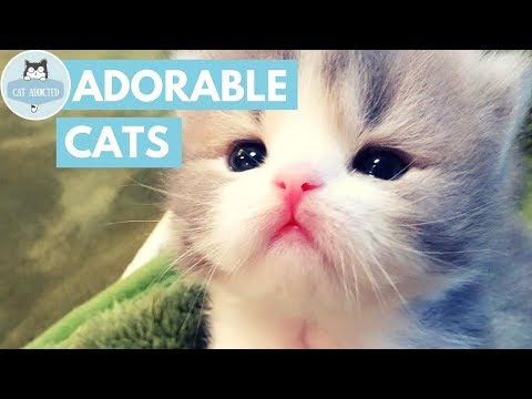 Cute Kittens That Will Make You Fall In Love