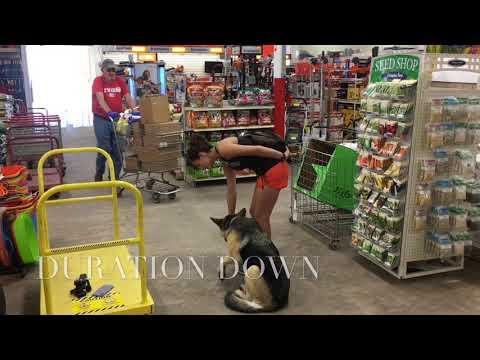 2.5 Year Old German Shepherd   Best GSD Dog Training   Off Leash K9   Board and Train   Oklahoma