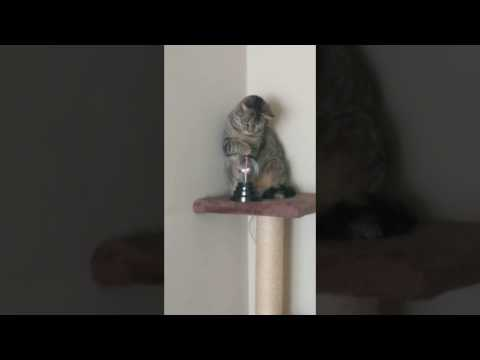 Cat Plays with Electricity Globe
