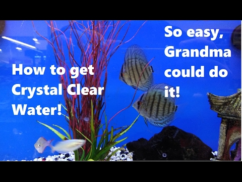 5 EASY Tips To Get Crystal Clear Water!