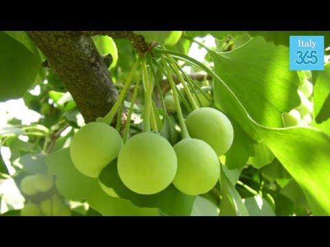 4 piante prevengono Alzheimer, depressione e ansia - Italy 365