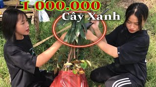 Cùng Anh PHD Troll Trồng 1000.000 Cây Xanh