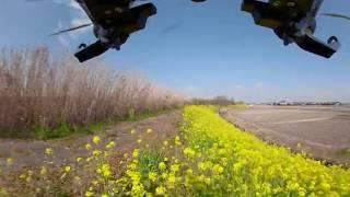 国安修二 - 菜の花の風景