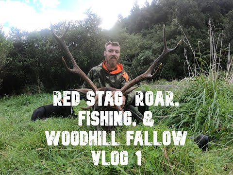 RED STAG  ROAR, FISHING & WOODHILL FALLOW VLOG 1
