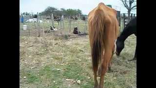 Maltrato de Animales - San Antonio - Entre Ríos
