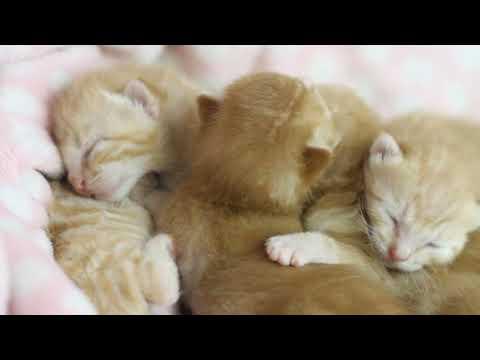 5只小橘貓擠成壹團睡得很香,打哈欠蹬腿吐舌頭,很溫馨很治愈!