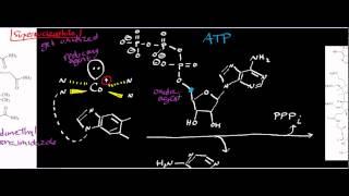 Corrin/B12 Biochemistry: Cobalamin Adenosyltransferase