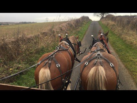 heavy-horses---episode-1-training-drive