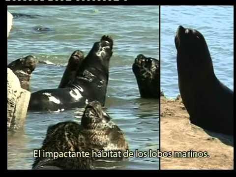 Mar del Plata video institucional