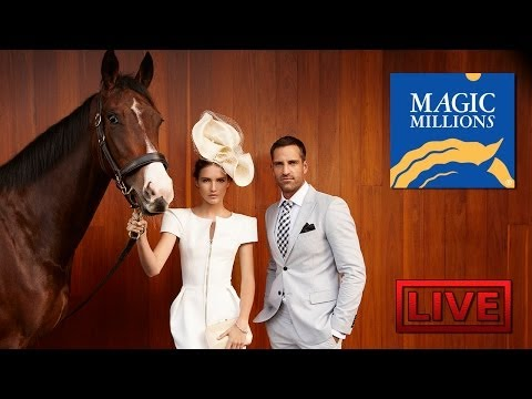 2014 Magic Millions Gold Coast Yearling Sale Day 6