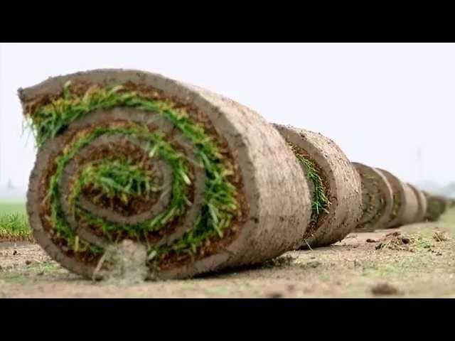 Zakladanie trávnika - trávny koberec