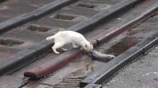 漁港内での日常です。 生きるために猫もカラスも必死なんだよー! 猫の...