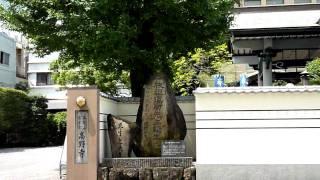 高知市大橋通りの南約100メートルに高野寺があってその入り口横にお...
