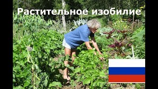 Растительное изобилие (по Филиппу Форреру) Холмистое садоводство