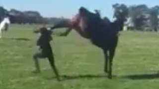 Horse Kicks Girl In Head Because She Had A Helmet On - Horse Bites Man
