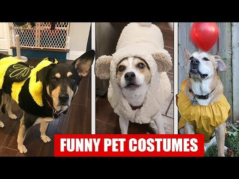 FUNNIEST DOG HALLOWEEN COSTUMES!