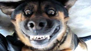 Лай смешных собак - смешная подборка видео. компиляция
