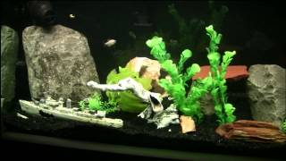 180 Gallon In-wall Freshwater Aquarium Progress #4