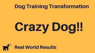 Iq K9 Training | Veterinary Recommended Dog Training | Oceanside Dog Training