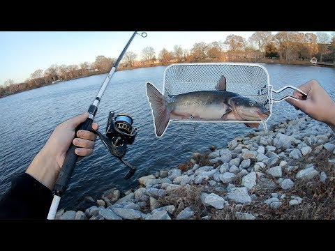 Catch, DEEP FRY, Eat!! - Ep.1: Catfish