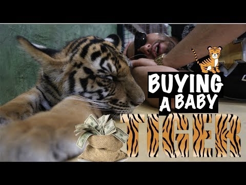 M2thaK Is Trying To Buy A Baby Tiger 🐯 in Thailand!!!