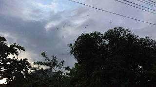 Download Video Chim Yến Kiếm Ăn Trước Nhà | Tôi Yêu Chim Yến MP3 3GP MP4