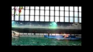 Дельфинарий Санкт-Петербург(Дельфинарий в Санкт-Петербурге. Выступления тюленя, морского льва, дельфинов. Полный обзор с описанием,..., 2013-10-28T15:09:32.000Z)