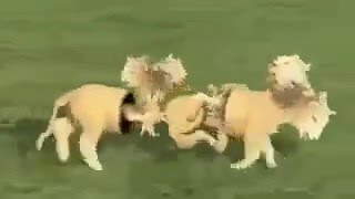 Funny Animals Videos , Best Funny Videos 2015  |   XXX  Video|  M R I Roby