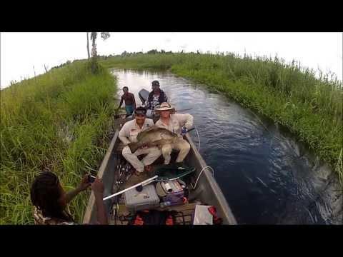 Wild River Fishing PNG, Papuan Black Bass