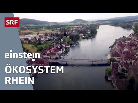 Der Rhein – wie gefährdet ist das Ökosystem? - Einstein vom 8.9.2016